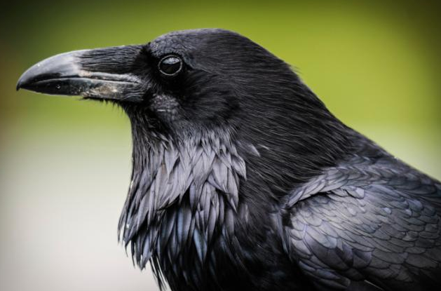 The Raven: Stanza 1: text, images, music, video | Glogster